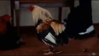 GALLON DRUNK two wings mambo (1991)