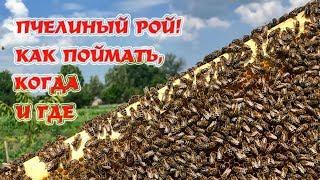🔴ЛОВЛЯ РОЁВ | Секреты установки ловушек.
