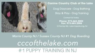 Dog Training In Sussex County Nj