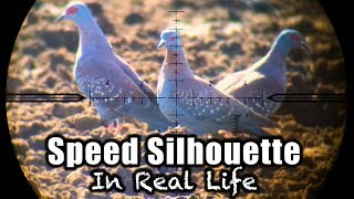 40 Pigeons in 8 Minutes - Speed Silo in Real Life!