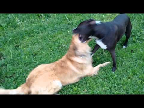 how-to-control-rough-play-with-dogs