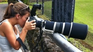 Bird and Wildlife Photography Equipment: Lenses, cameras, teleconverters, tripods, monopods