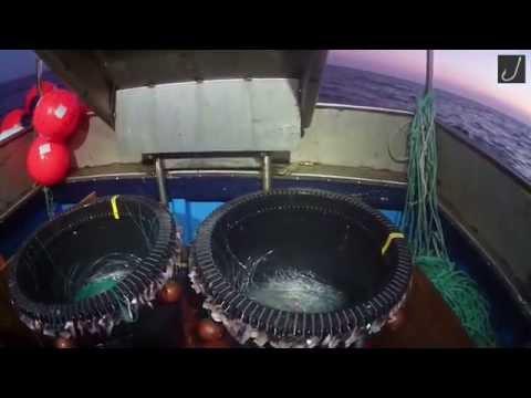 Journée de Pêche. Palangres à Merlan à Belle Ile