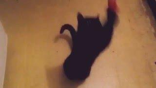 Кажется я достала кошку!😾