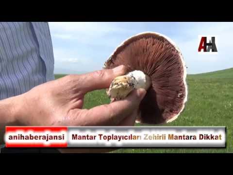 download Mantar Toplayıcıları Zehirli Mantara Dikkat