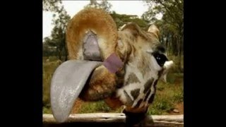 Śmieszne zwierzęta #2