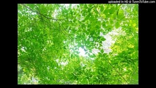 TOMOKO ARAKAWA -  In Aoba forest |荒川知子 - 青葉の森で PV