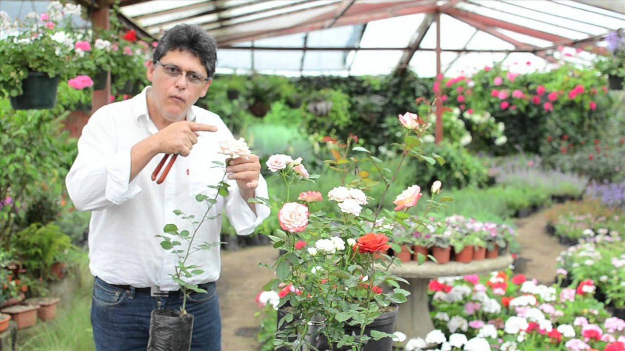 Cuido y poda de rosas vivero el zamorano youtube for Funcion de un vivero escolar