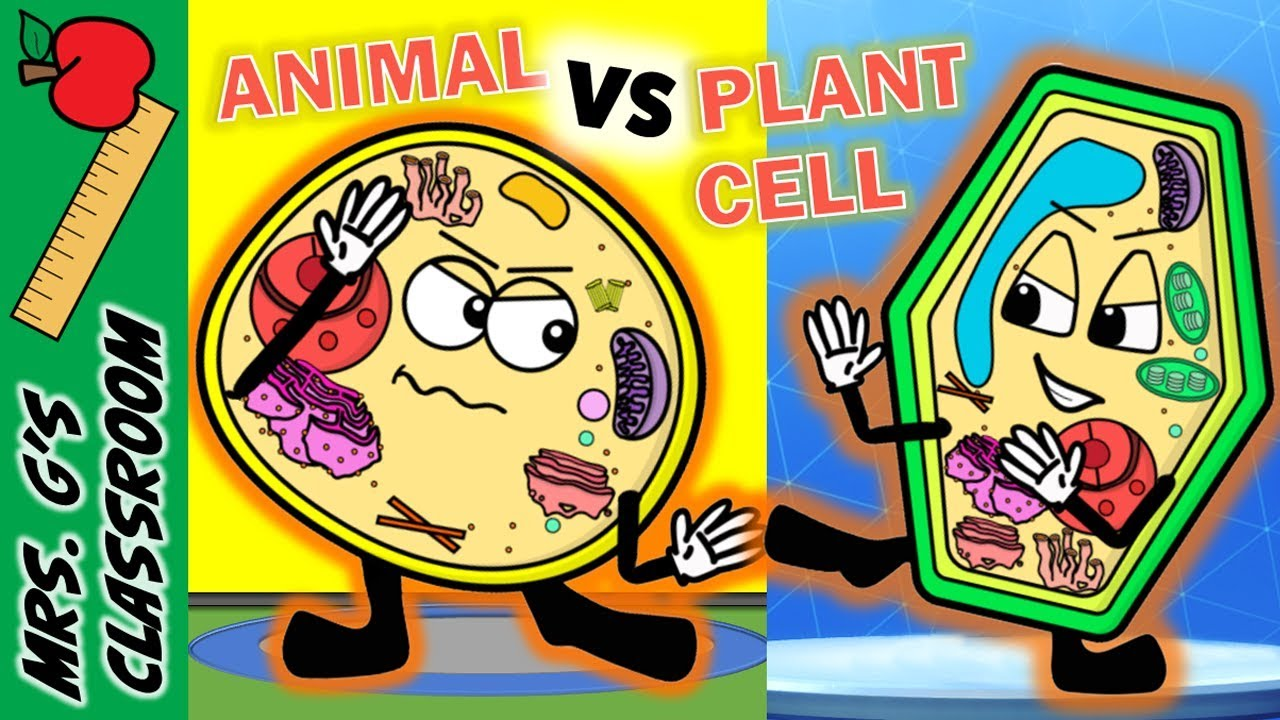 what is the difference between plant and animal cell [ 1280 x 720 Pixel ]