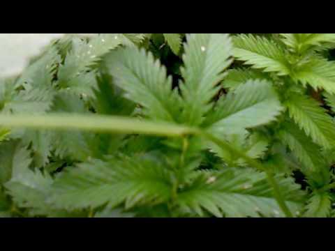 Семена, семена оптом садовый инвентарь оптом полив горшки оптом кашпо оптом садовые фигуры оптом грунт оптом удобрения оптом пестициды.