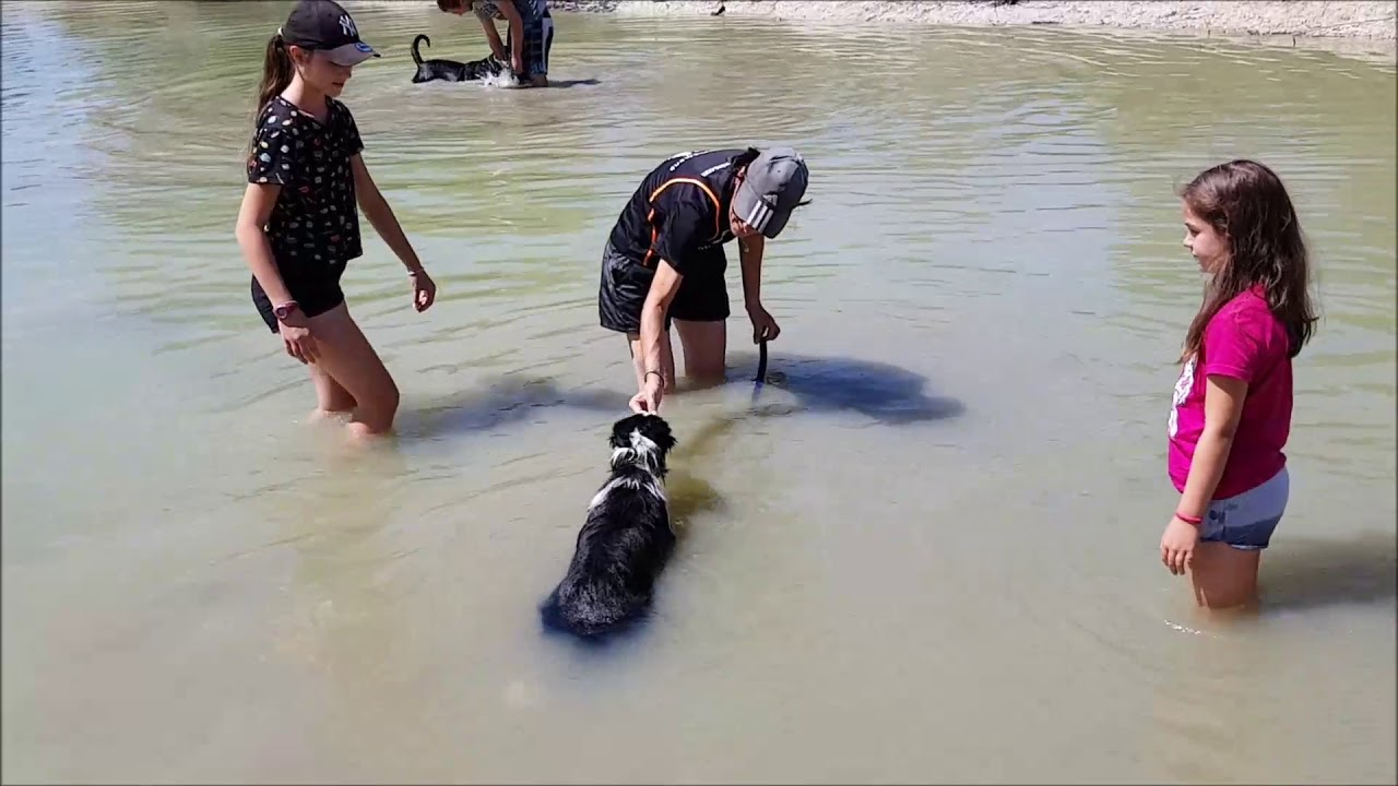 MesSages Canins : Familiariser son chien à l'eau