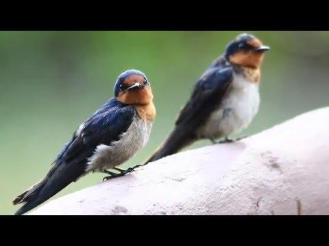 Migratory Birds Convention Centennial