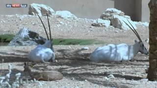 مؤتمر رابطة حدائق الحيوان لأول مرة بالشرق الأوسط