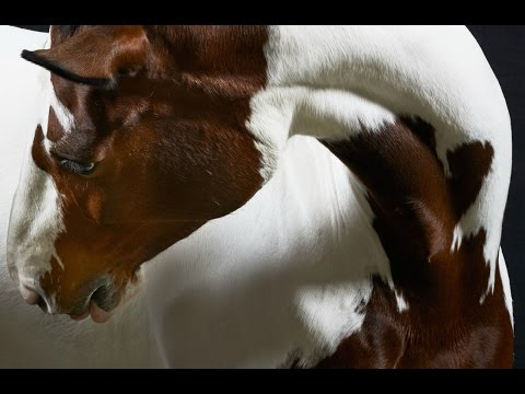 Good Fight    Equestrian Music Video