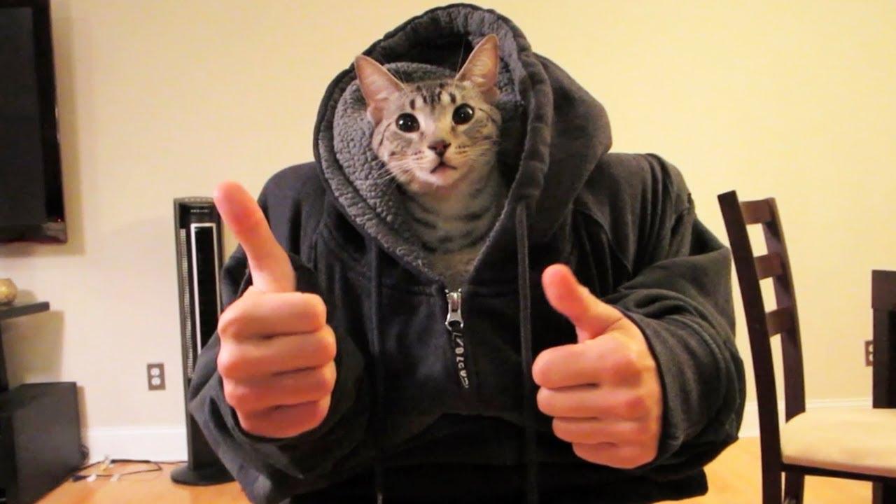 Bf Vs Gf Cat Videos