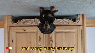 Ep 2: Oakley the Dachshund's BIRTHDAY VLOG  Funny Dog Video