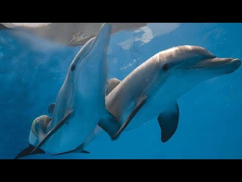 Winter & Hope 2018 🐬 Dolphins UPDATE  the stars of Dolphin Tale 1 & 2 in 4K