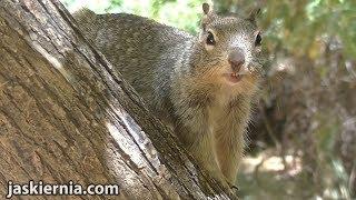 Ciekawostki 446 Zion National Park - Part 2