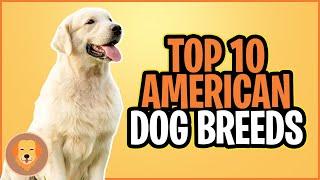 TOP 10 AMERICAN DOG BREEDS