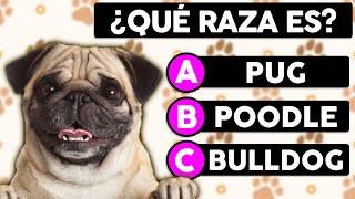 Adivina la Raza de estos Perros    ¿Cuántas razas Identificas?