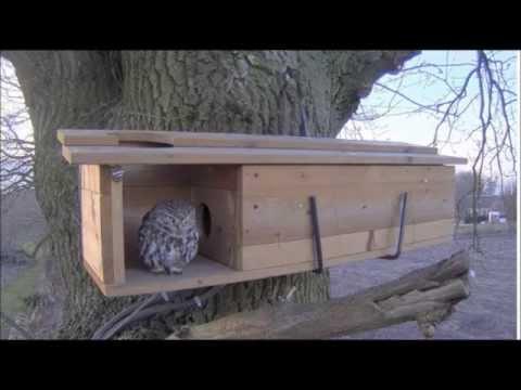 Little Owls nest box visit 6:22pm 3-11-2015 - YouTube