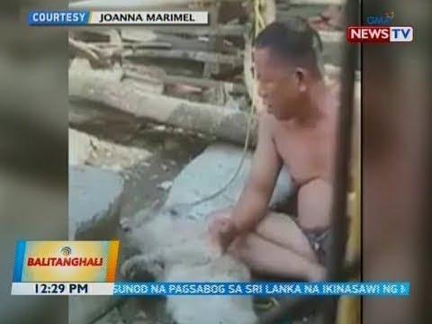BT: Video Ng Asong Walang Awang Pinagsasaksak, Idinulog Sa Animal Rights Group