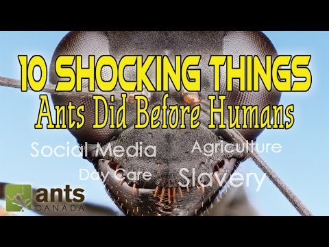 10 SHOCKING THINGS ANTS DID BEFORE HUMANS