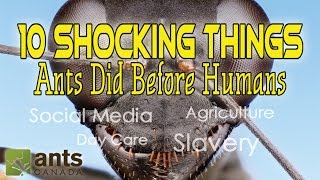 Click here to SUBSCRIBE: https://goo.gl/tlCQJZ Agriculture, Social Media, Day Care, Slavery: This video lists some of the most surprising things ANTS did way ...