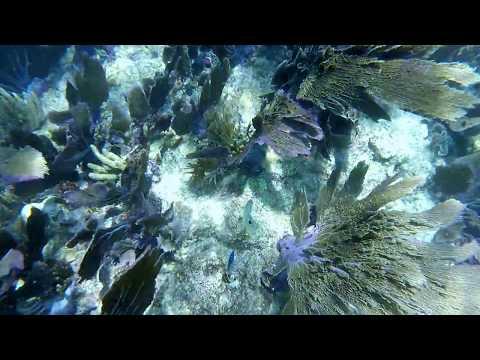 Snorkeling Sombrero Reef Florida