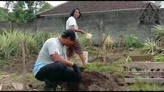Sabda Pangon 19 Oktober 2020 |A UKIL NGEMIL