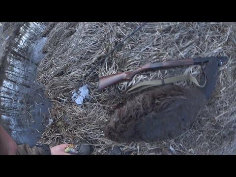 Охота на бобра с  ружьем, с подхода весной, как охотится на бобра