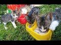 Kediciklerin 2. aşı zamanı geldi, eğlenceli çocuk videosu