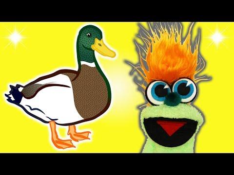 FUNNY DUCK JOKE! - JOKES FOR KIDS! 100% Child-Appropriate Jokes! FUNNY! Animal! LOL! Sock Puppet!