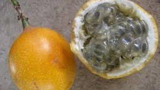 Cómo Sembrar fruta Granadilla - TvAgro por Juan Gonzalo Angel