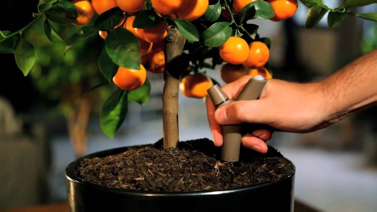 Parrot Flower Power Bluetooth Indoor Outdoor Plant Sensor