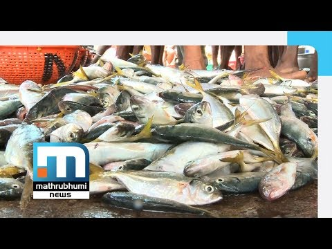 New Kit To Detect Chemicals In Fish In 3 Seconds | Mathrubhumi News