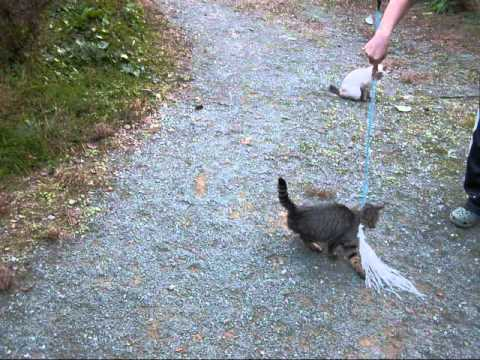 回転猫 Japan cat to anything rotation【いなか猫792】japanese funny cat
