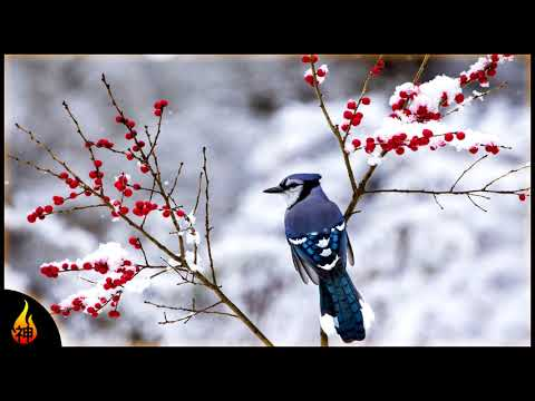 Beautiful Ambient Music | Blue Jay | Soft Quiet Music