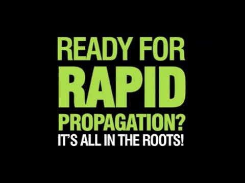 X-Stream Propagation