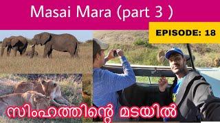 Masai mara (part 3) / lions sleeping on road !!