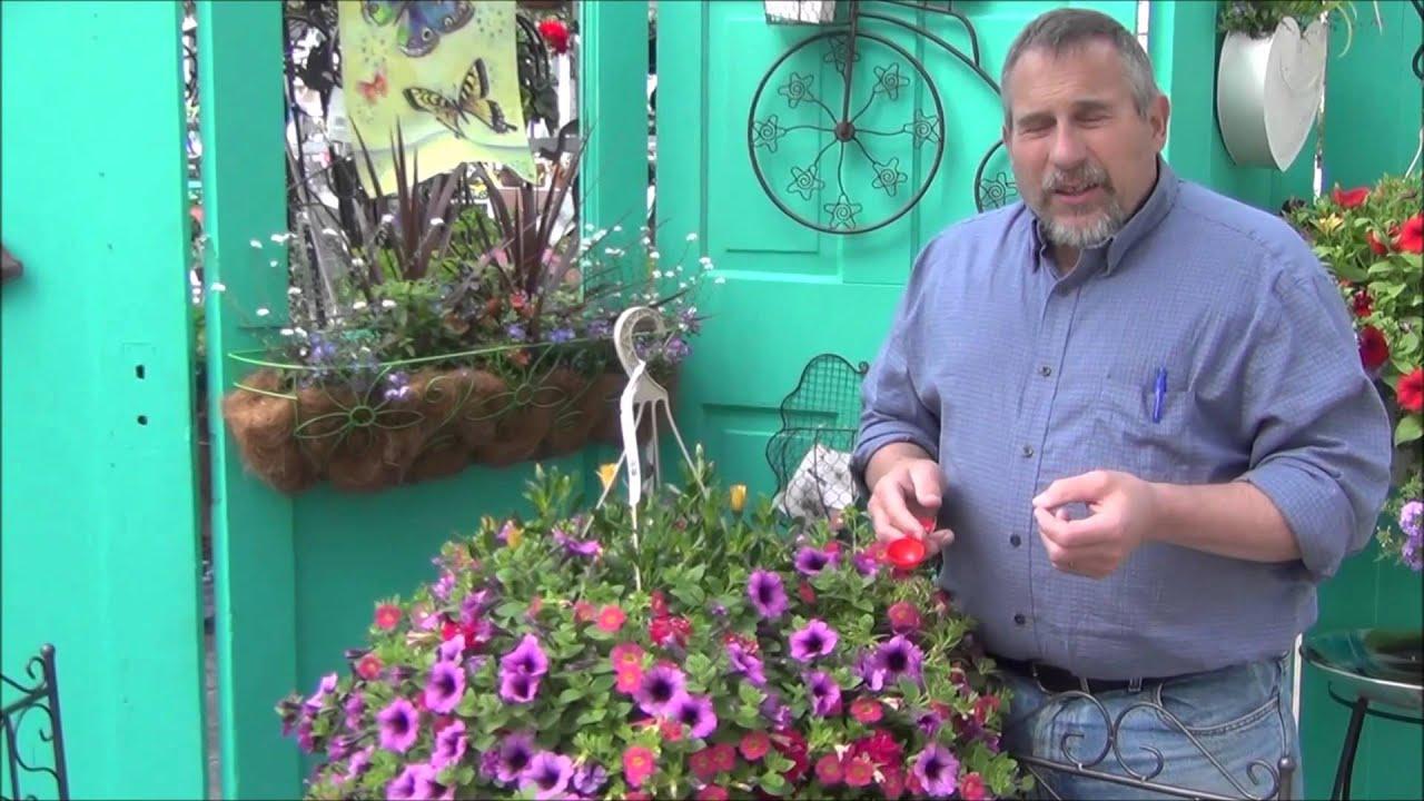Hanging Flower Baskets Spokane : Hanging basket care by the plant farm