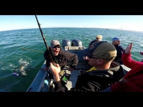 King Salmon Fishing In Homer Alaska