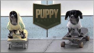 BATB X   Puppy Battle