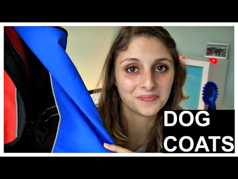 Best dog coat - for your dog in the winter