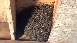 Just like the fruit of the month club, the bee hive house just keeps on giving