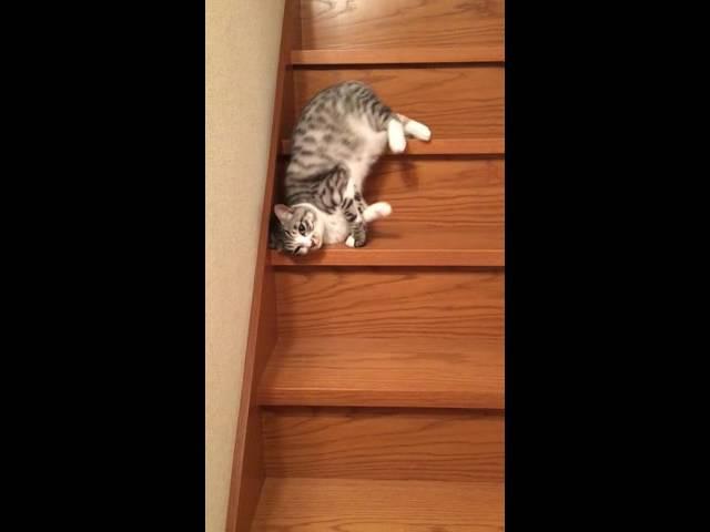 流れるように落ちていく猫(流動体)