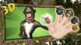 3D Finger Family Song   3D Baboon Daddy Finger Nursery Rhyme   Hip-Hop Monkeys Finger Family Animals