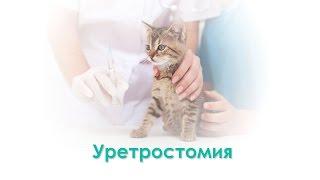 Уретростомия. Ветеринарная клиника Био-Вет.