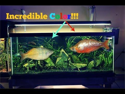 Beautiful Australian Rainbow Fish Saved The Show| Planted Tank Melts!!!