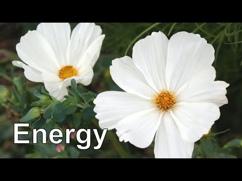 Grounding Meditation: Calling Back Your Energy